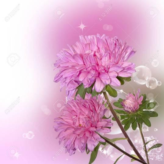 14946830-fleurs-roses-d-automne-décoration-sur-fond-abstrait
